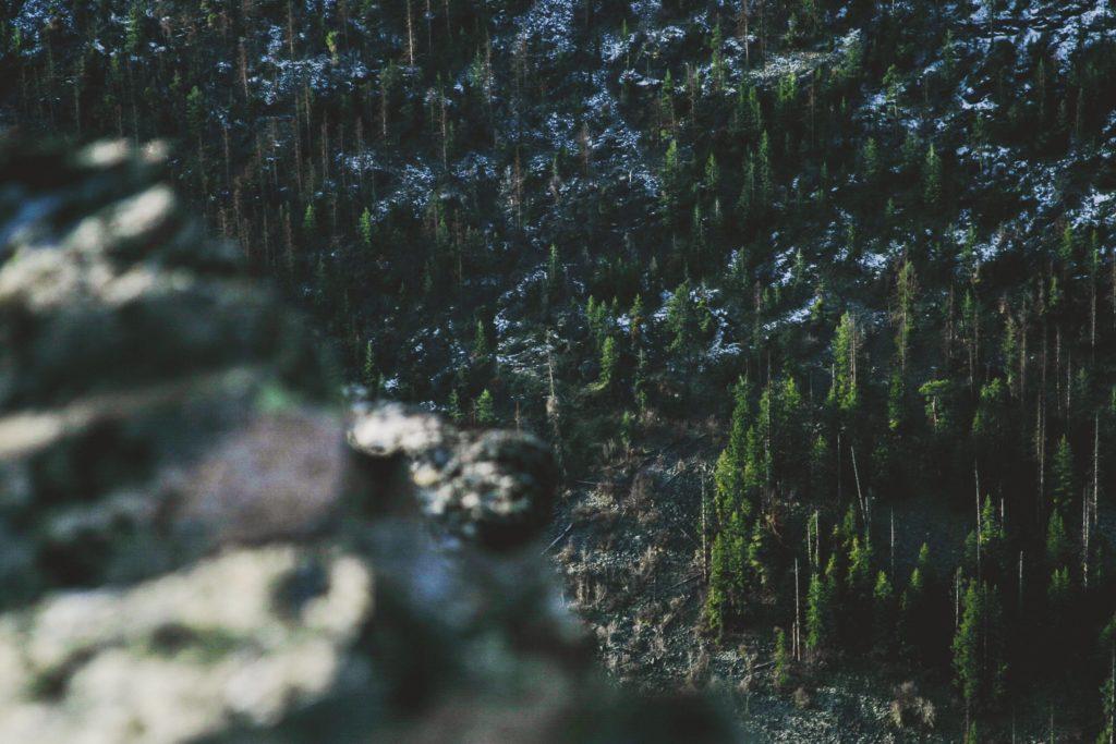 Holzkohlegrills